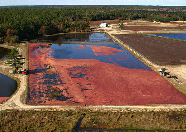 Helicopters allow cranberry growers to maintain and harvest their bogs without damaging them with heavy vehicles. Photo courtesy of Ryan Rotors.