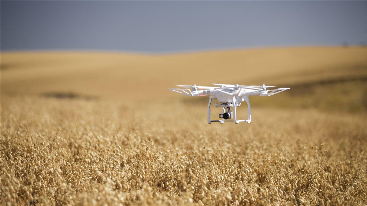 Photography of Robert Blair, farmer and Measure's VP Agriculture, piloting a DJI Phantom 3 in his field of chick peas. Measure is a company that offers turn key drone solutions to it's clients. Blair Farm Kendrick, ID USA