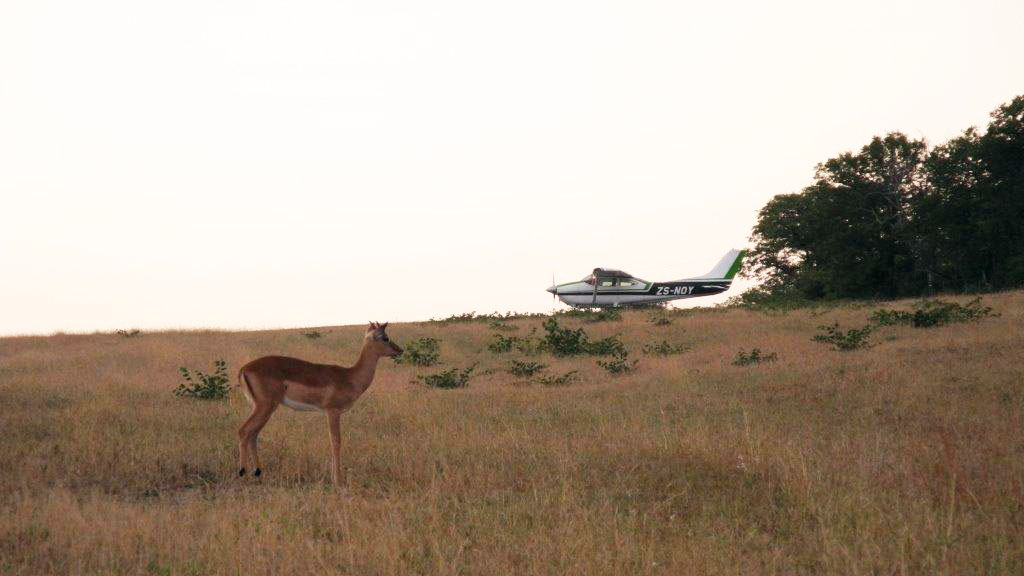Wildlife at Ngala. Photo by Tom Haines.