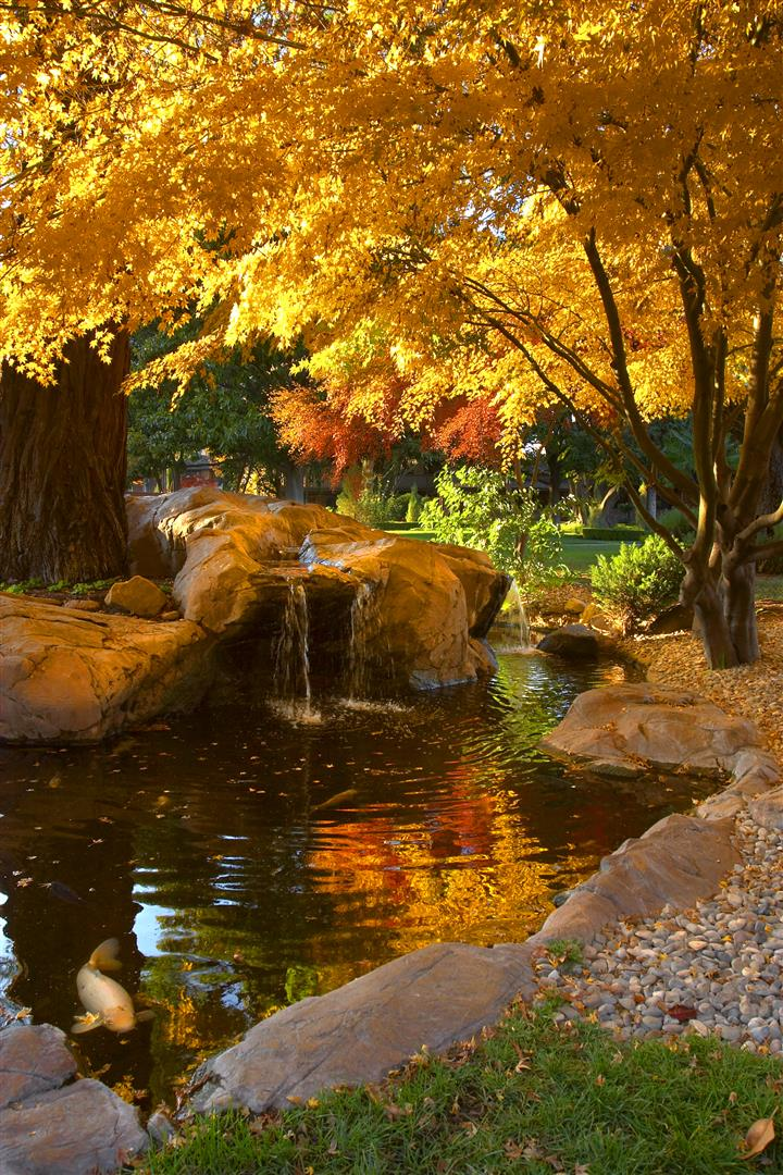 Downtown's Paso Robles Inn boasts a wonderful garden complete with koi pond and Japanese maples that look spectacular in fall. Photo by Ron Bez.