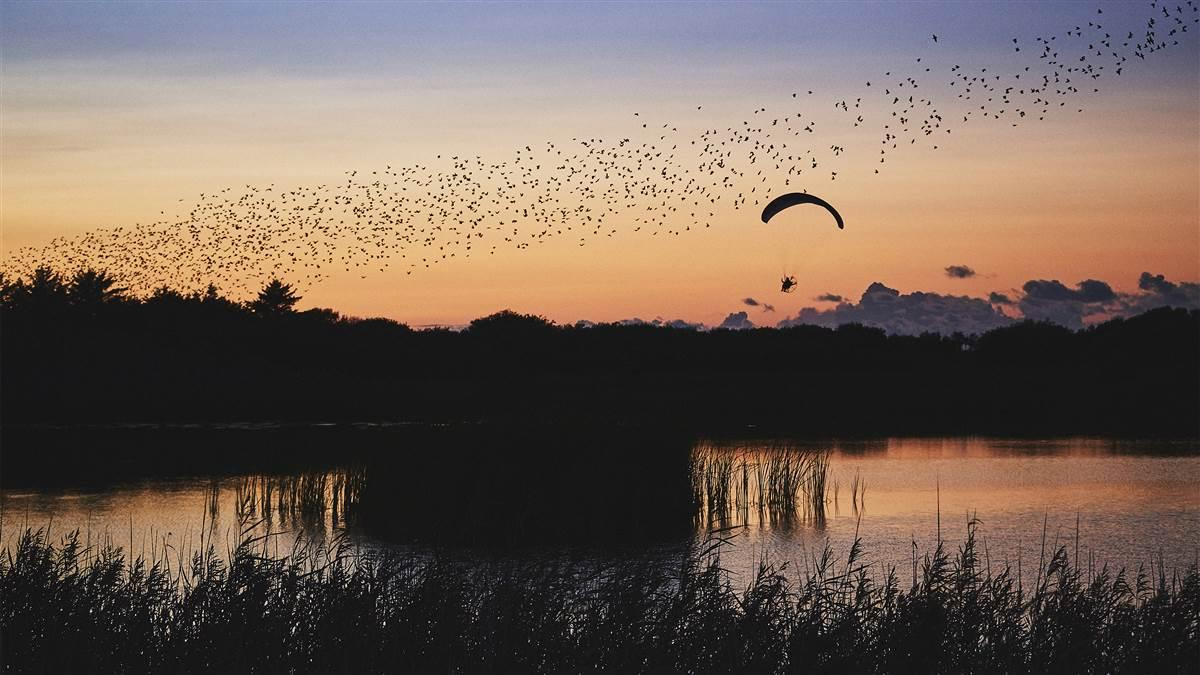 Horacio Llorens flies his electric powered paraglider with a large group of starlings during Sort Sol (Black Sun) in southwest Denmark. Photo by Esben Zøllner Olesen/Red Bull Content Pool.