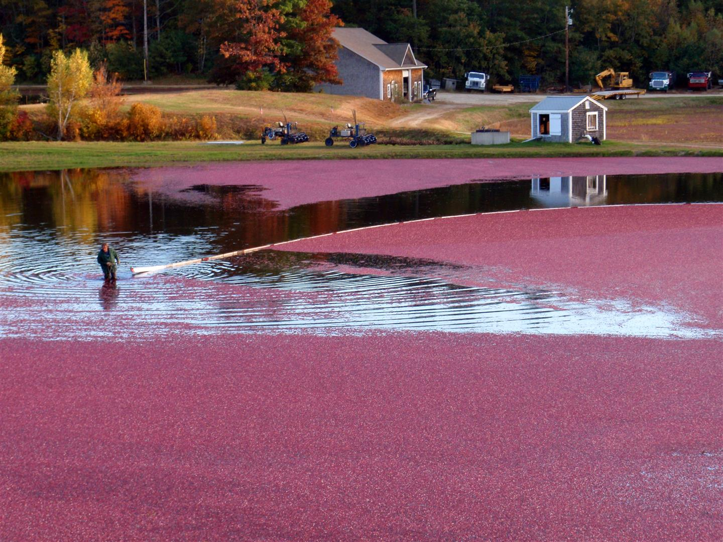 Coralling the cranberry crop. A berm at the edge of the bog holds the water in. Photo courtesy Mayflower Cranberries.