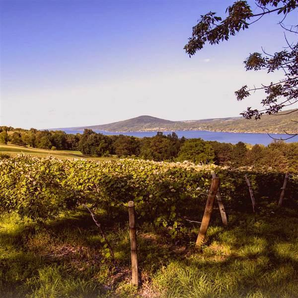 The Arbor Hill Winery perches above Canadaigua Lake. The Finger Lakes region, defined by 11 long, finger-shaped lakes stretching north to south across central New York state, is a four-season destination that offers a refreshing getaway from urban life. Photo courtesy Arbor Hills Winery.